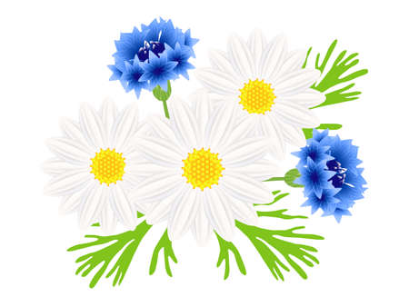 Daisies with blue cornflowers on a white background.