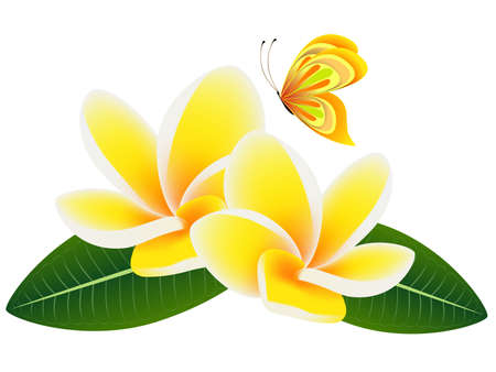 Flowers frangipani (Plumeria) with leaves and a butterfly.