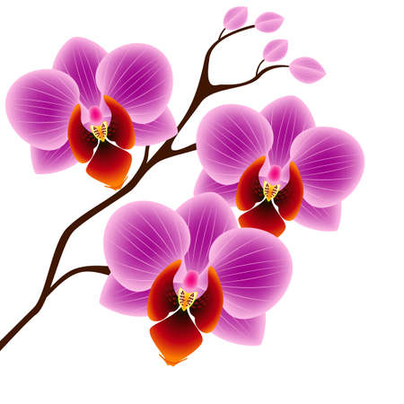 A branch of orchids on a white background.