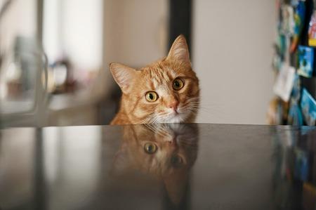big beautiful eyes red cat Stock Photo