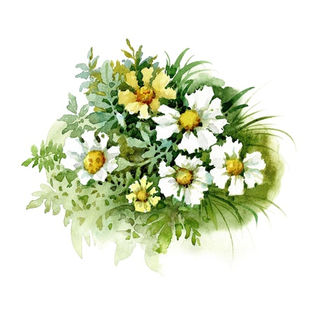Watercolor Flower Collection: White Marigold