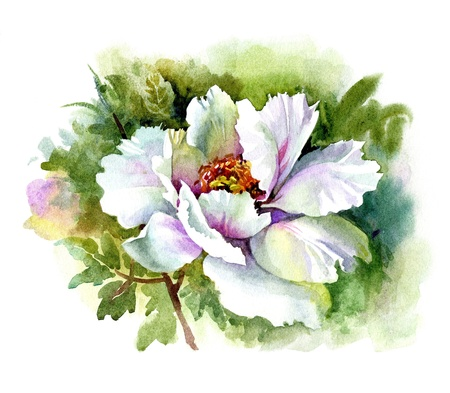 Watercolor Flower Collection: Peony Stock Photo - 11200196