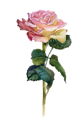 painting and stylized: Pink rose