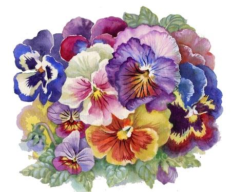 violas: Viola Tricolor