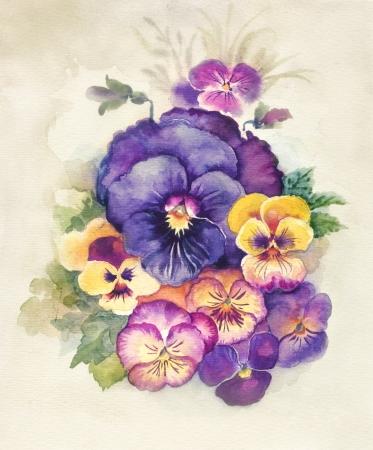 violeta: Acuarela de Flora Collection Viola Tricolor