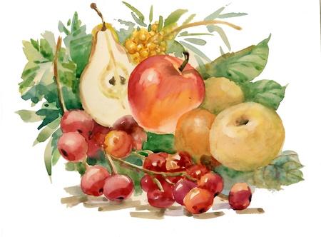 Aquarela Flora cole��o: Fruits