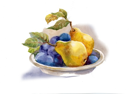 Watercolor painting: pears and plums