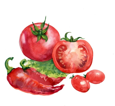 tomate. pintura em aquarela sobre fundo branco