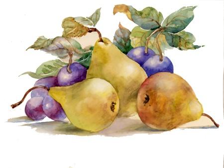 Pintura em aquarela: peras e ameixas