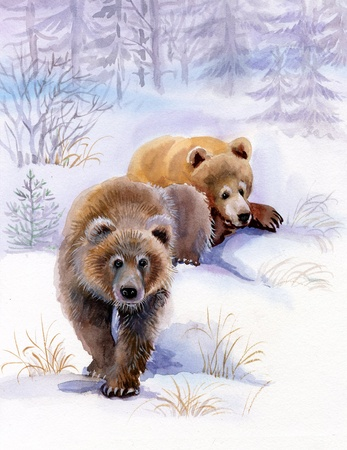 brown bears in the snow photo