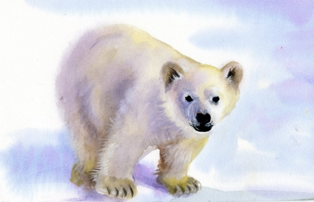 Polar bear in snow photo