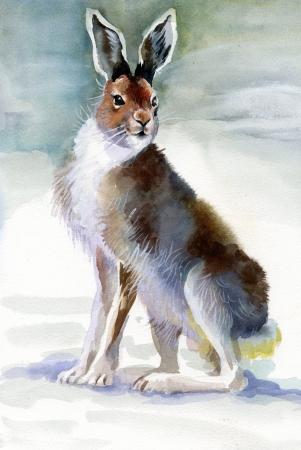 Coelho inverno