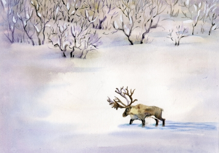 Deer in the snow photo