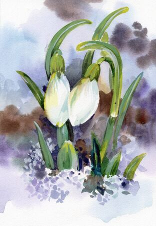 snow drops: Spring snowdrop flowers with snow in the forest Stock Photo