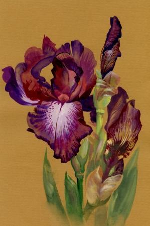 Aquarela Cole��o Flor: Iris