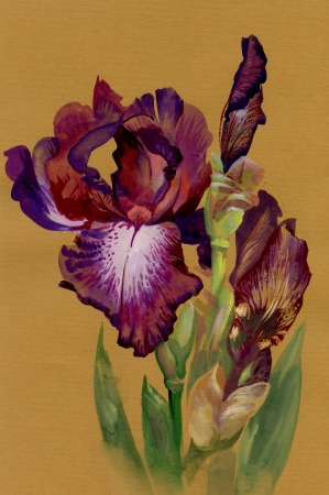wash painting: Watercolor Flower Collection: Iris Stock Photo