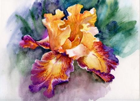 Yellow iris photo
