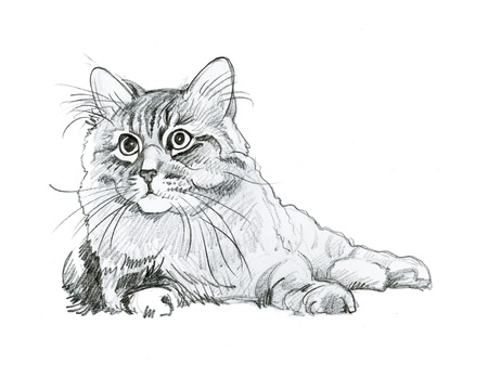 Animal Collection  Cat