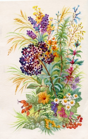 野生の花の花束 写真素材