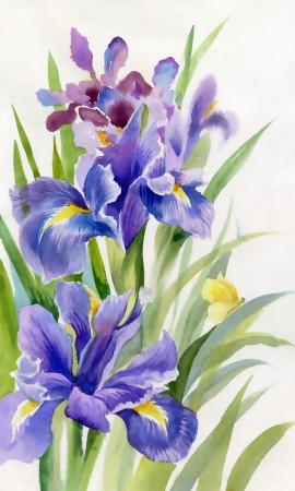 Watercolor Flower Collection Iris Archivio Fotografico - 20528023