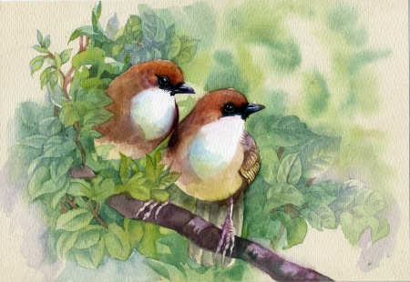 botanical illustration: Painting collection Birds of spring
