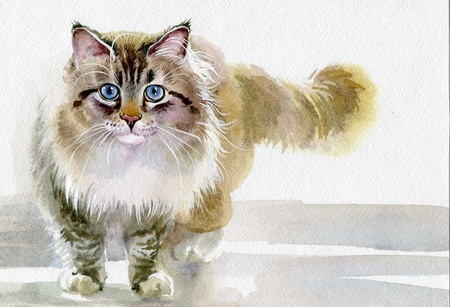 tone shading: Watercolor Animal Collection  Cat