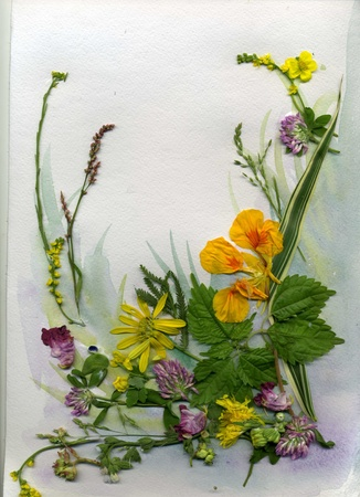 Summer Flowers, herbarium photo