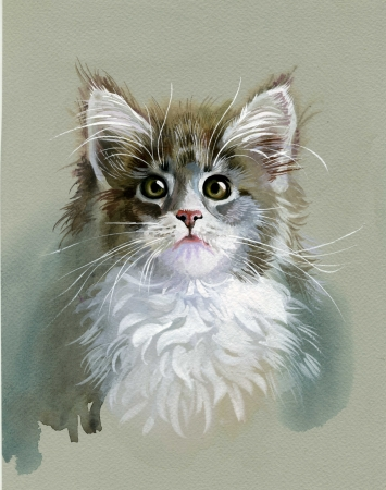 Watercolor Animal Collection  Gray Cat photo