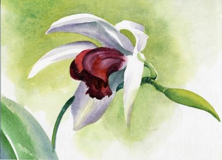 Aguarela da flor da cole