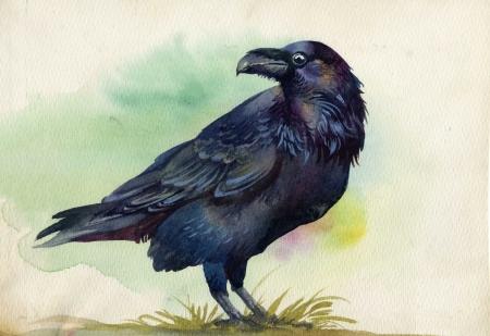 Corvo preto pintura em aquarela
