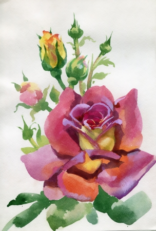 Watercolor Flower Collection  Rose