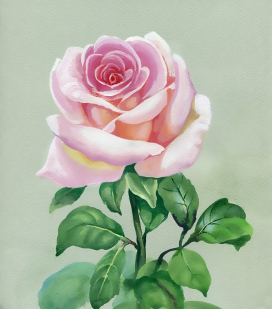 Rose pink  Watercolor Painting photo