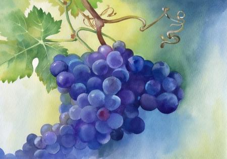Aquarel illustratie van druiven met bladeren