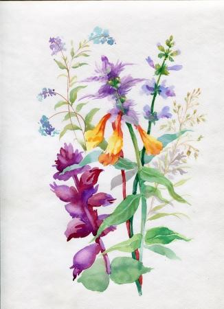 Aquarela flores silvestres e gram