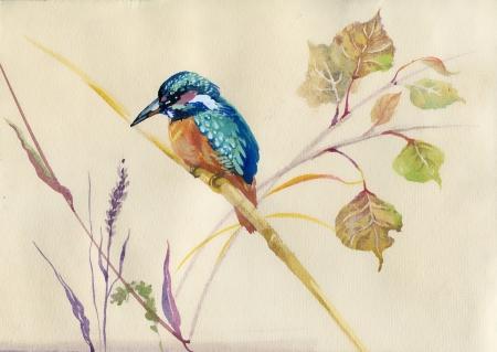 P�ssaro Kingfisher comum