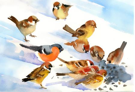 hand schilderen: Vogels eten de zaden op de sneeuw Stockfoto