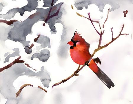 bosque con nieve: P�jaro rojo en una rama de nieve Foto de archivo