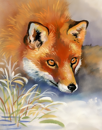 Portrait of a fox photo