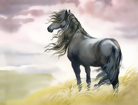 strong wind: Black horse in a field