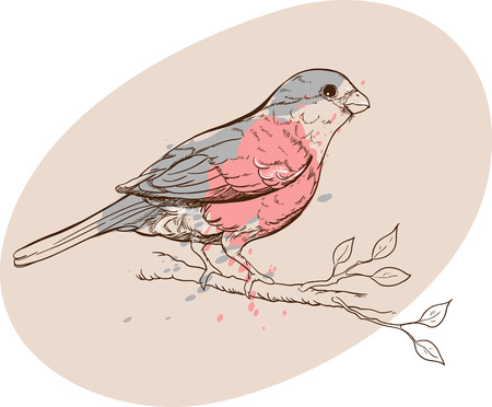 pensil: vectorized drawing of bullfinch bird on a branch in pastel colors Illustration