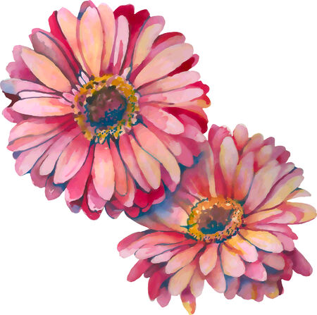 close-up view of two gerbera flowers in watercolor Vector