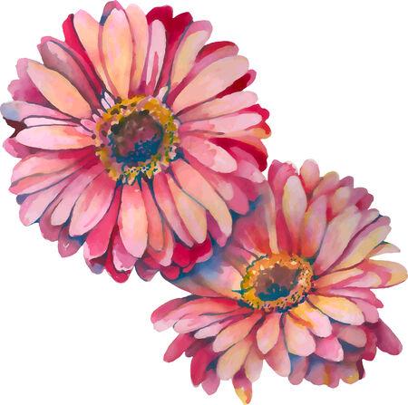 aquarel: close-up view of two gerbera flowers in watercolor