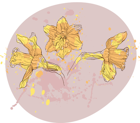 Vectorized drawing of narcissus in pastel colors and blots of paint