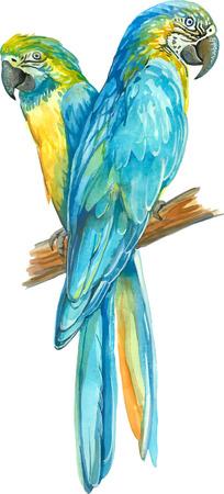pajaro dibujo: dos amarillas loros Ara azules en un banch Vectores