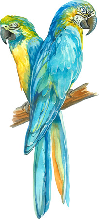 two yellow blue Ara parrots on a banch
