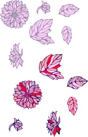 georgina: isolated objects of decorative dahlia and leaves 2 Illustration