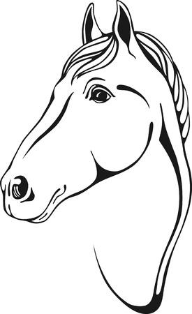 dessin noir et blanc: contours en noir et blanc de tête de cheval dans le style skertch