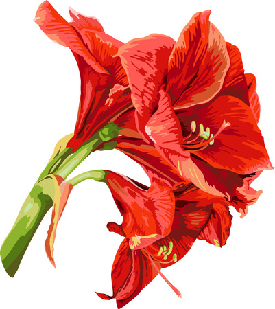 isolated detailed image of amaryllis flower on a stem in watercolor style