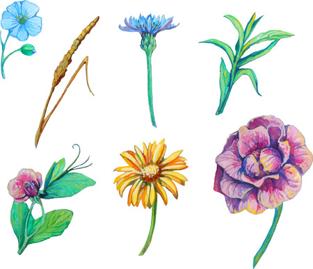 set isolated floral elements of flowers of camomile, Cichorium, forget-me-not, branches and leaves in watercolor style