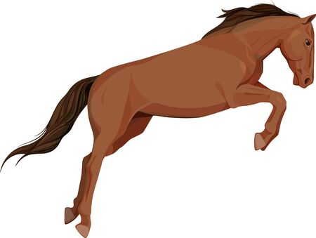 look at: isolated image of jumping horse, a side look